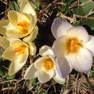 Kathy Ptasek - yellow flowers