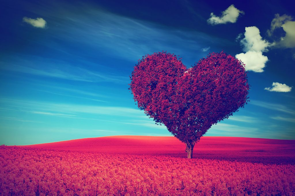 Heart shape tree with red leaves on red flower field. Love symbo
